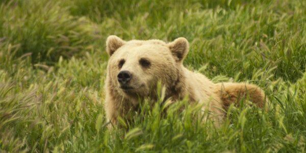 Nemzetközi medve nap