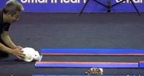 A teknős és a nyúl